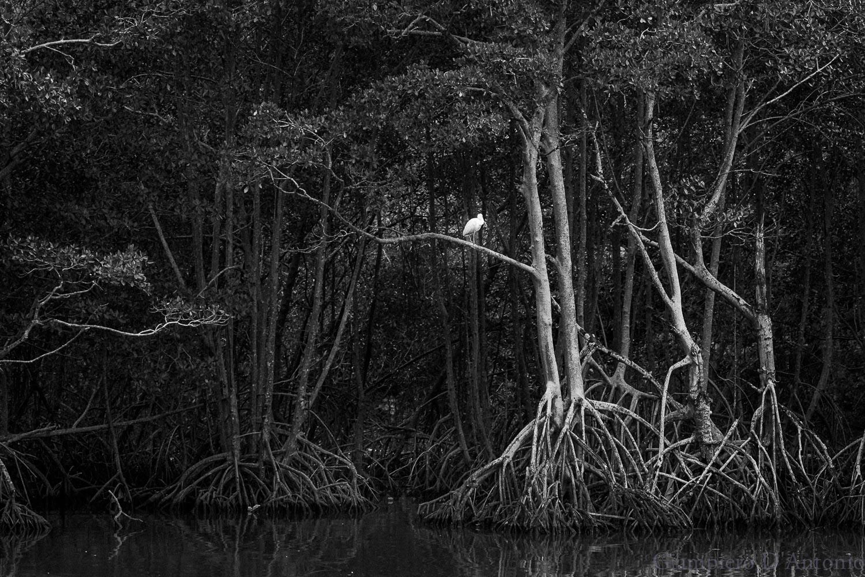 Wild Life in Rio00010.jpg