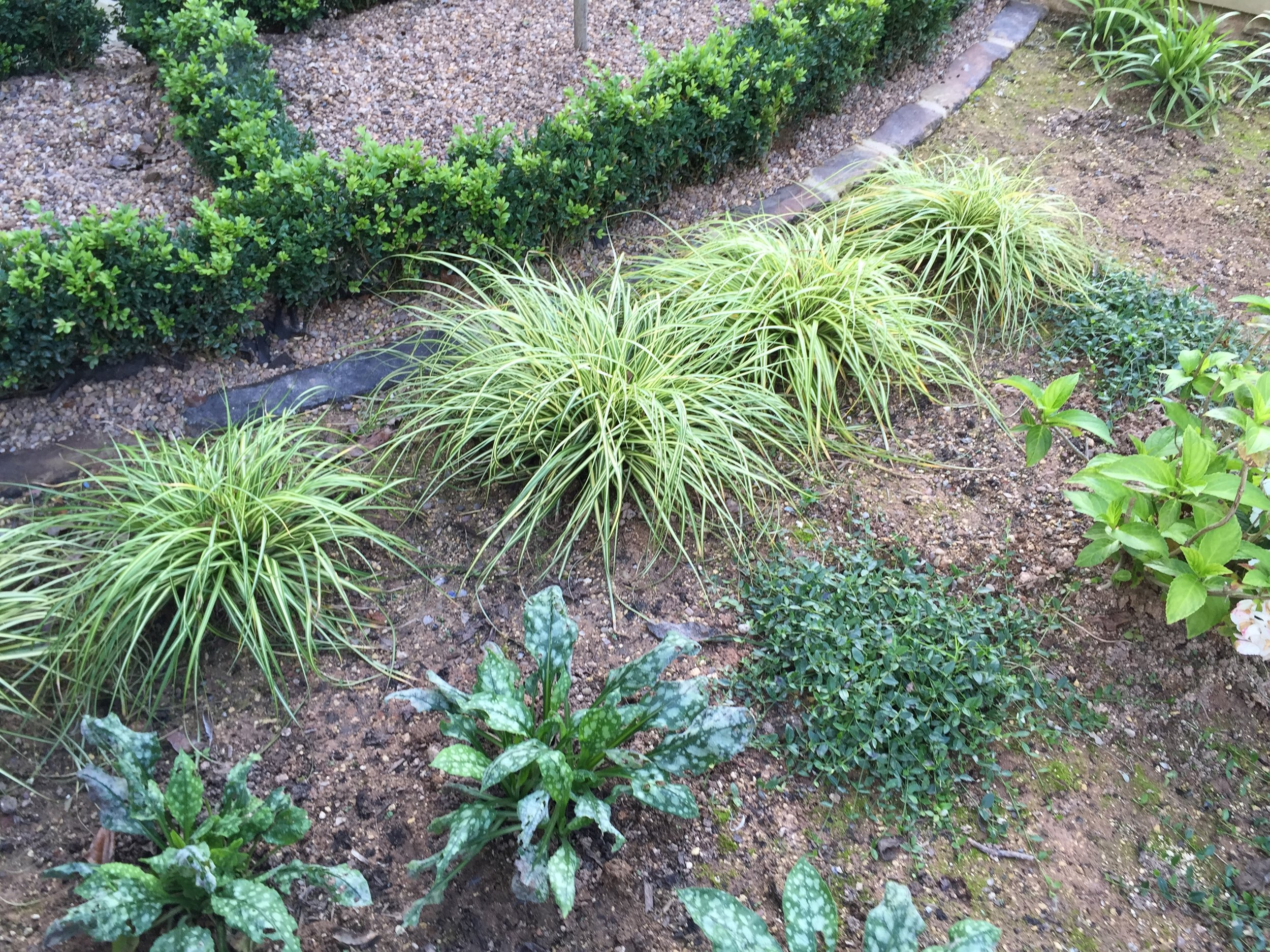 Shade tolerant planting at the front of the house.