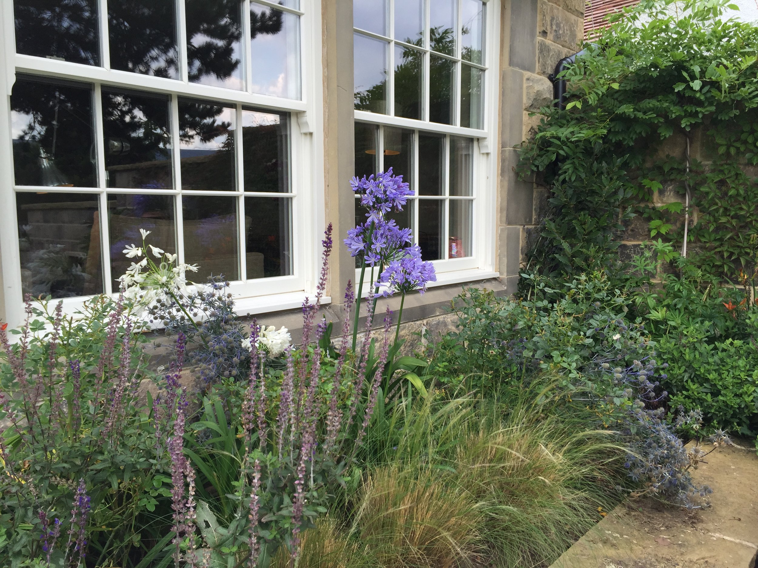 New border planting with blue and white Agapanthus, salvias, Eryngium (sea holly) and floaty grass,  Stipa Pony Tails .