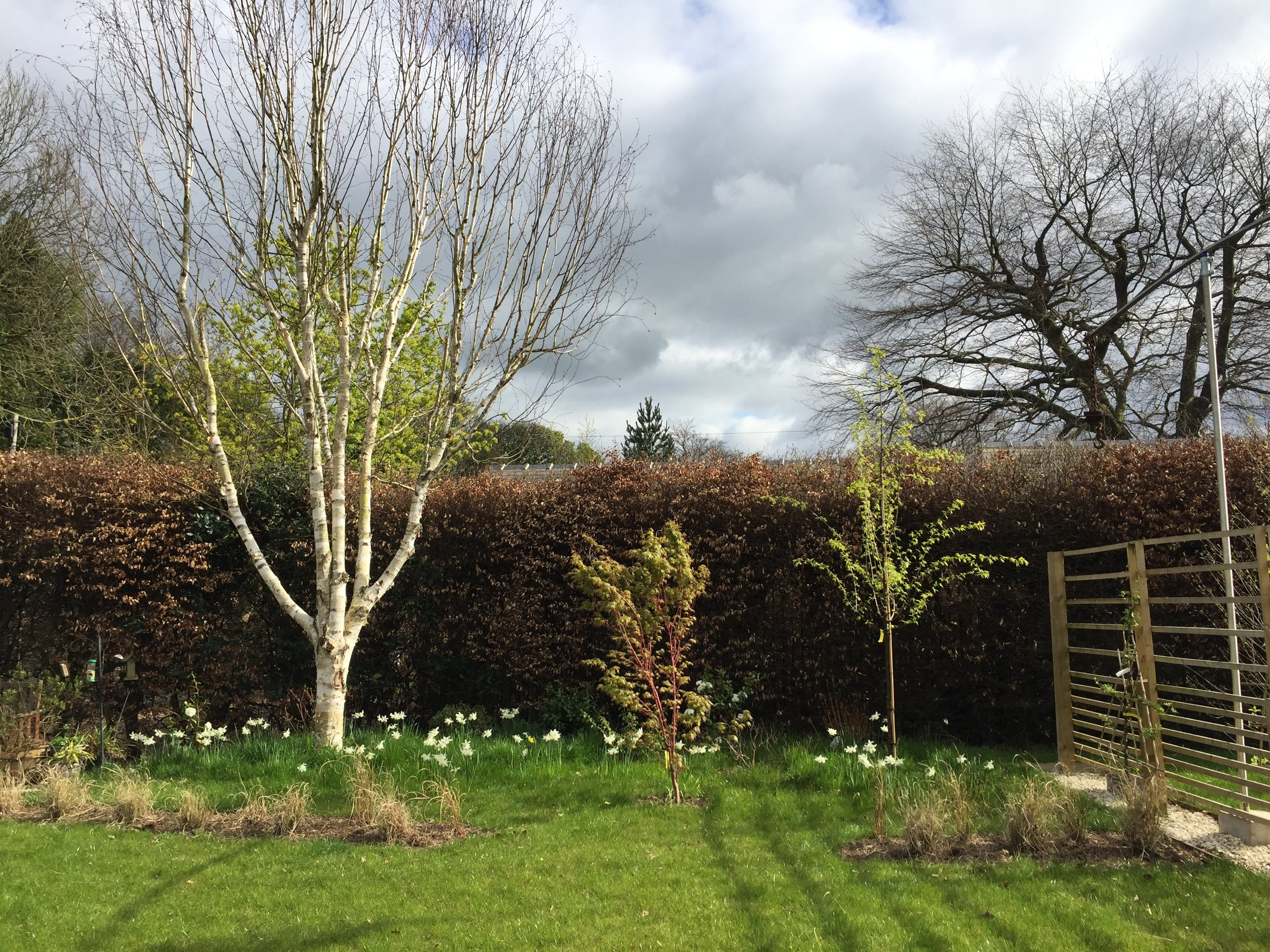 View from the house into the garden. New trees were planted to balance the existing birch.