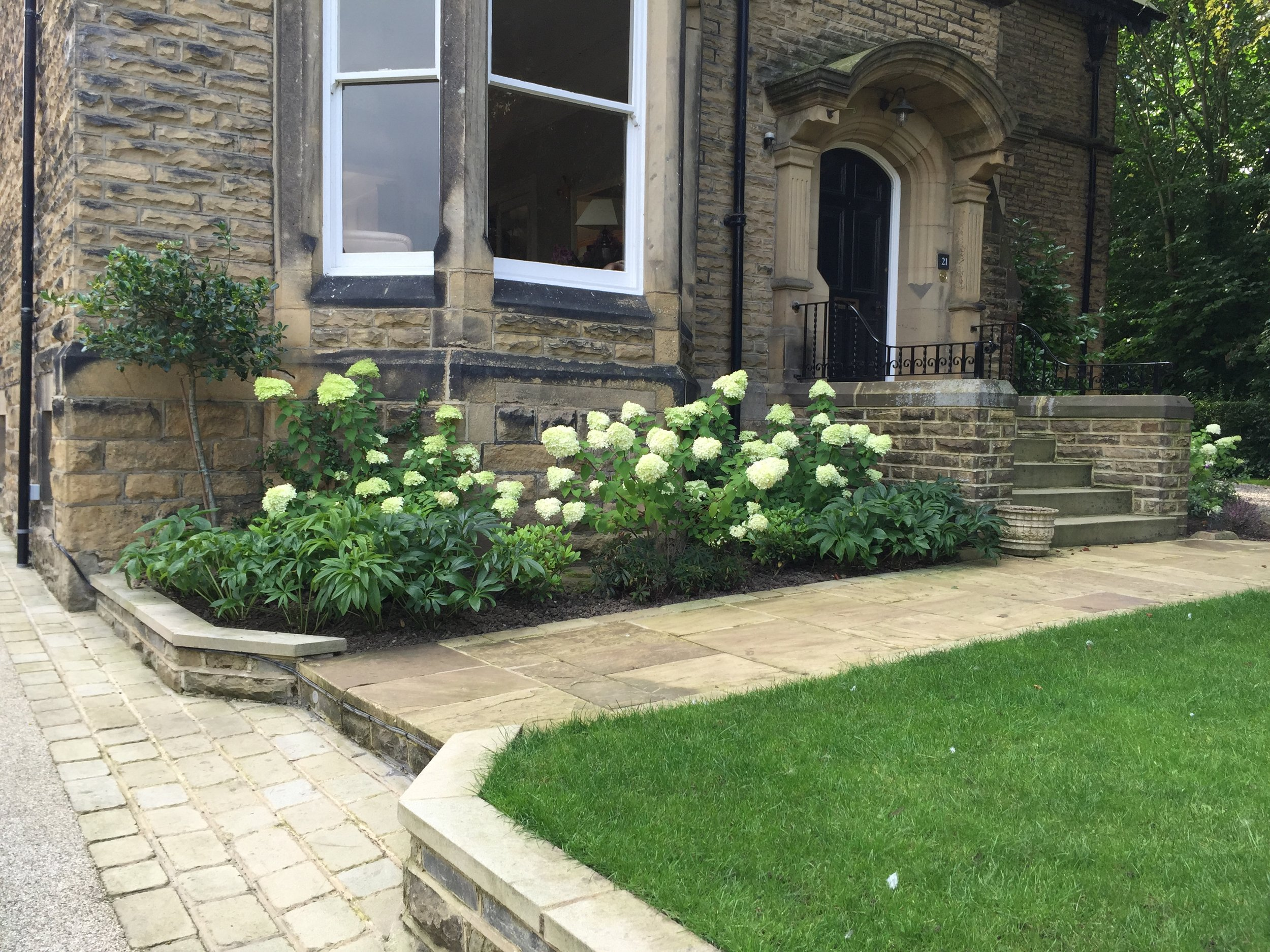 Large bay window anchored with planting - Hydrangea Limelight with an edging of white and dark hellebores
