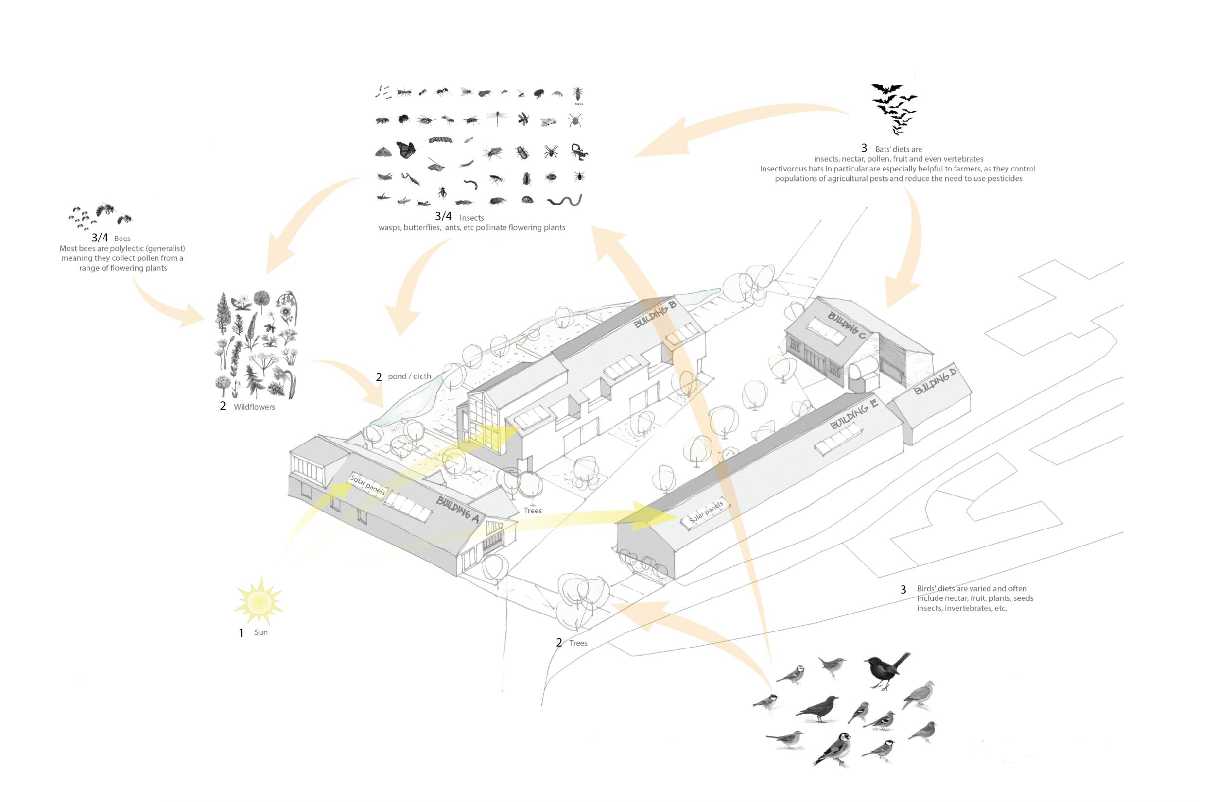 Architect Biodiversity