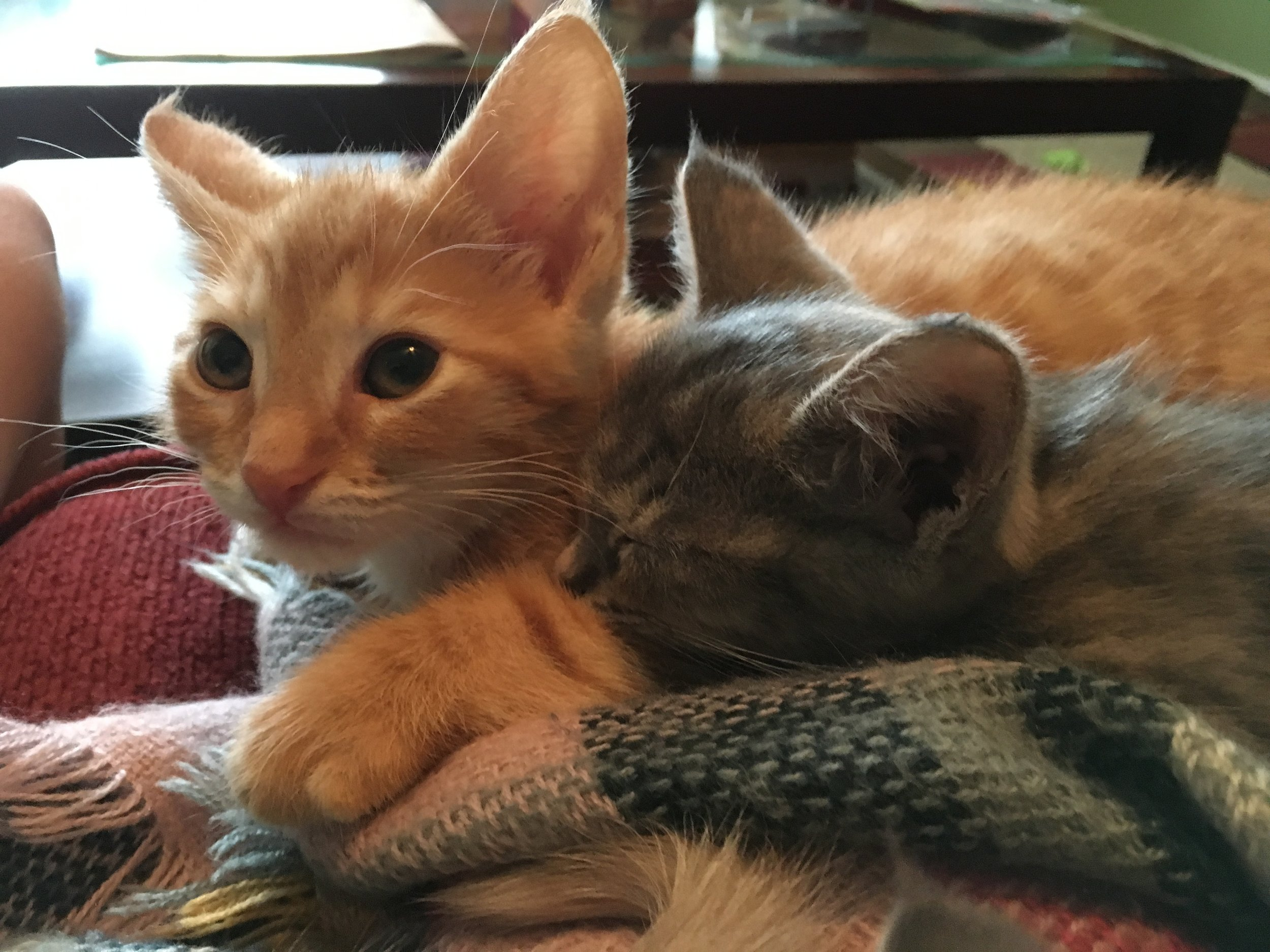 Cuddly kitties.JPG