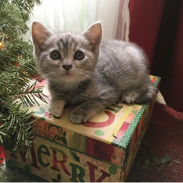 Willow Cat Berkeley.PNG