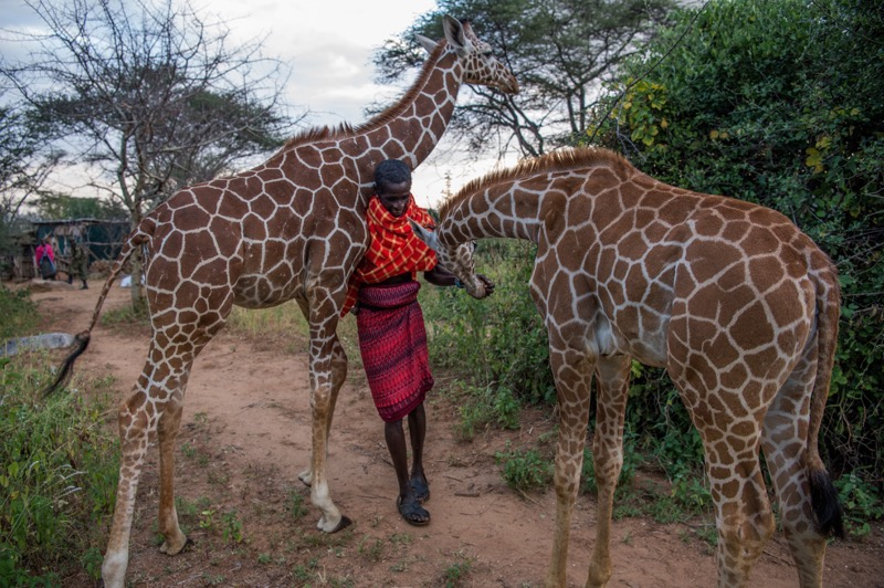 two friendly giraffes at the sanctuary.