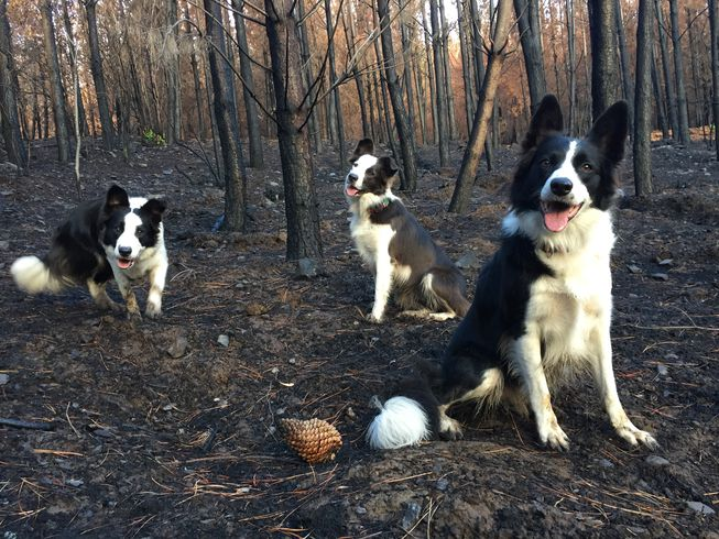Olivia, Summer and Das in the woods on a non-working day. (Photo: Francisca Torres)