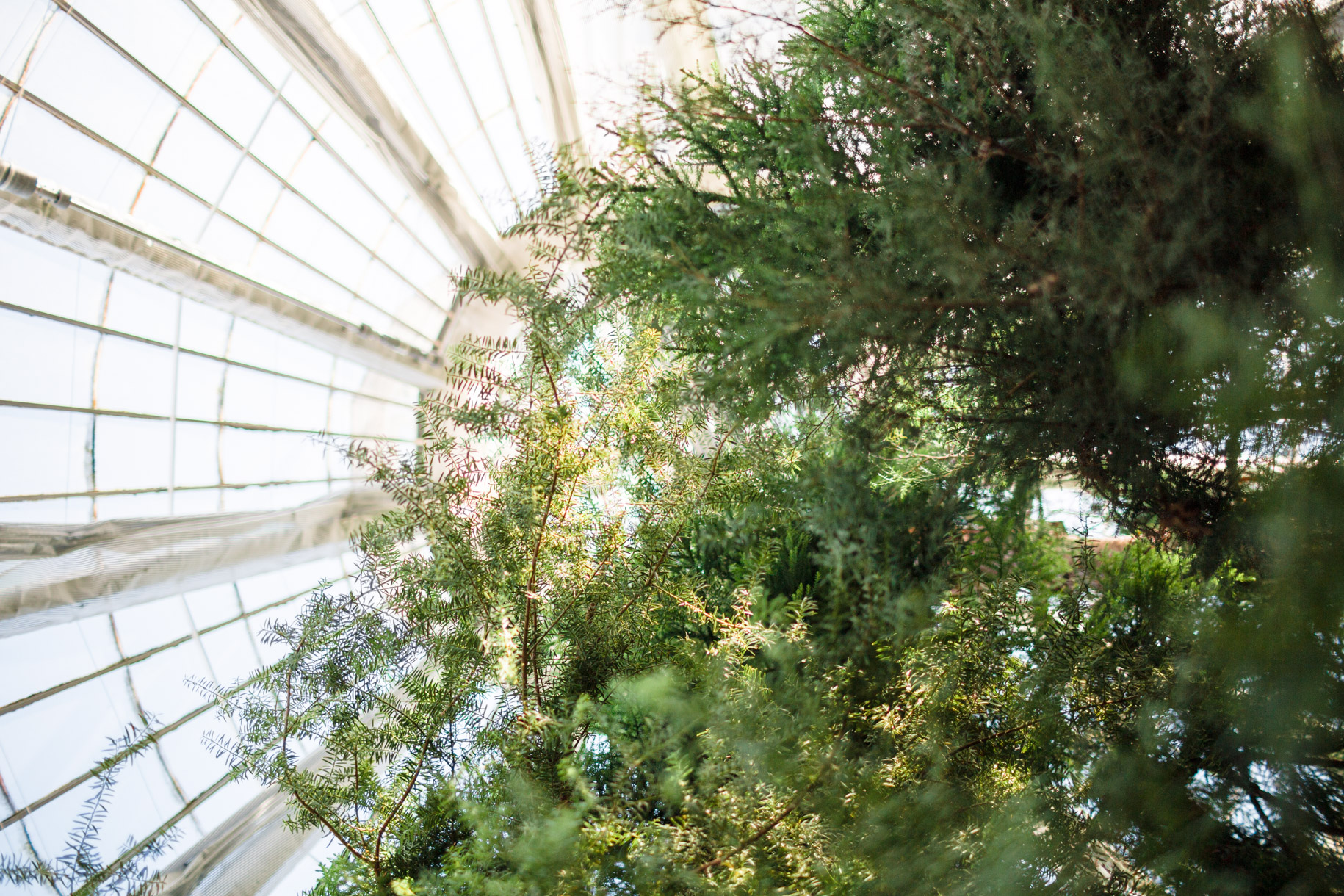 Looking up into the glass ceiling at the Botanisk Have in Copenhagen, Denmark.