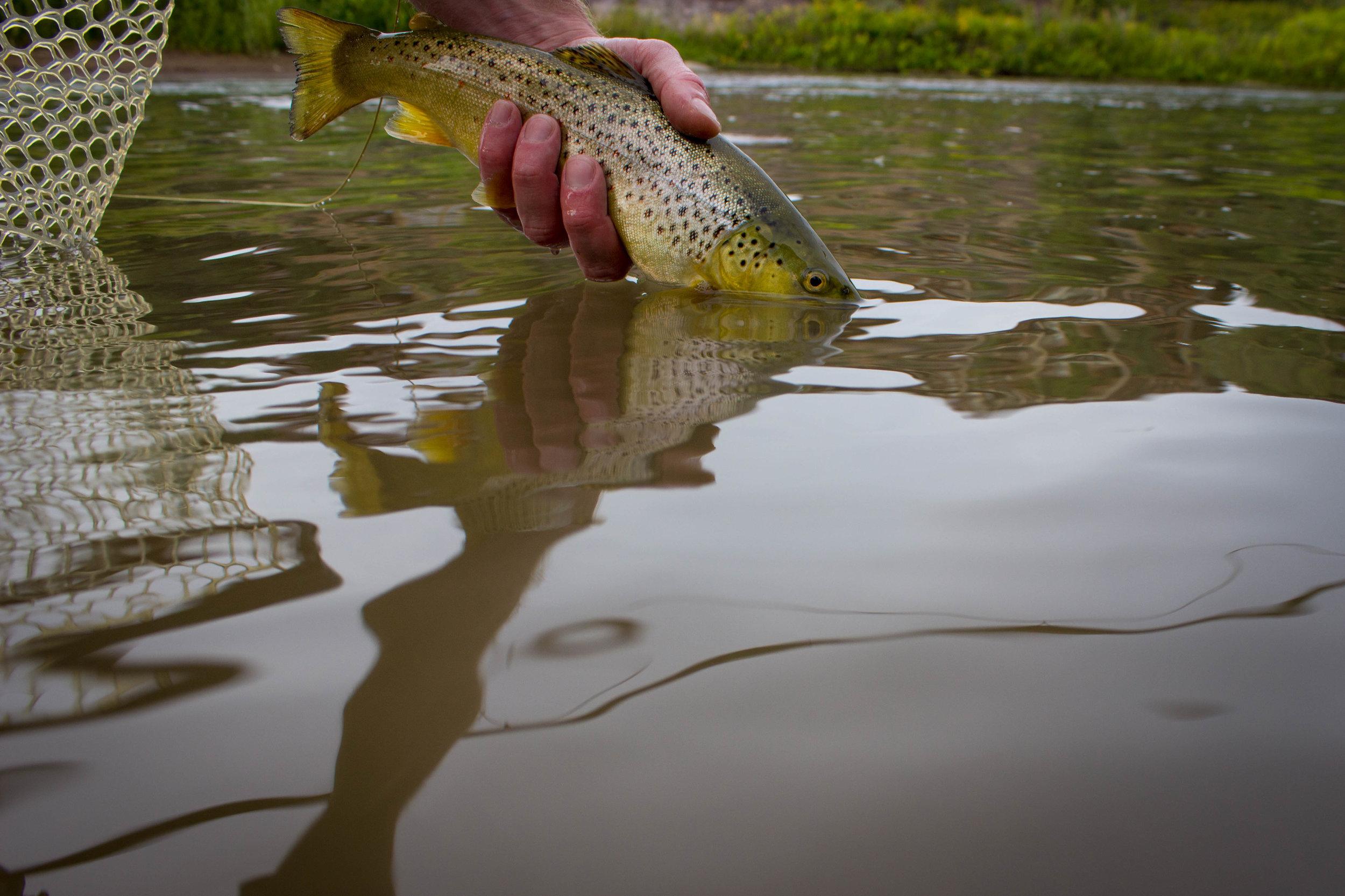 Jillian Schuller Photography - Animas River - 03