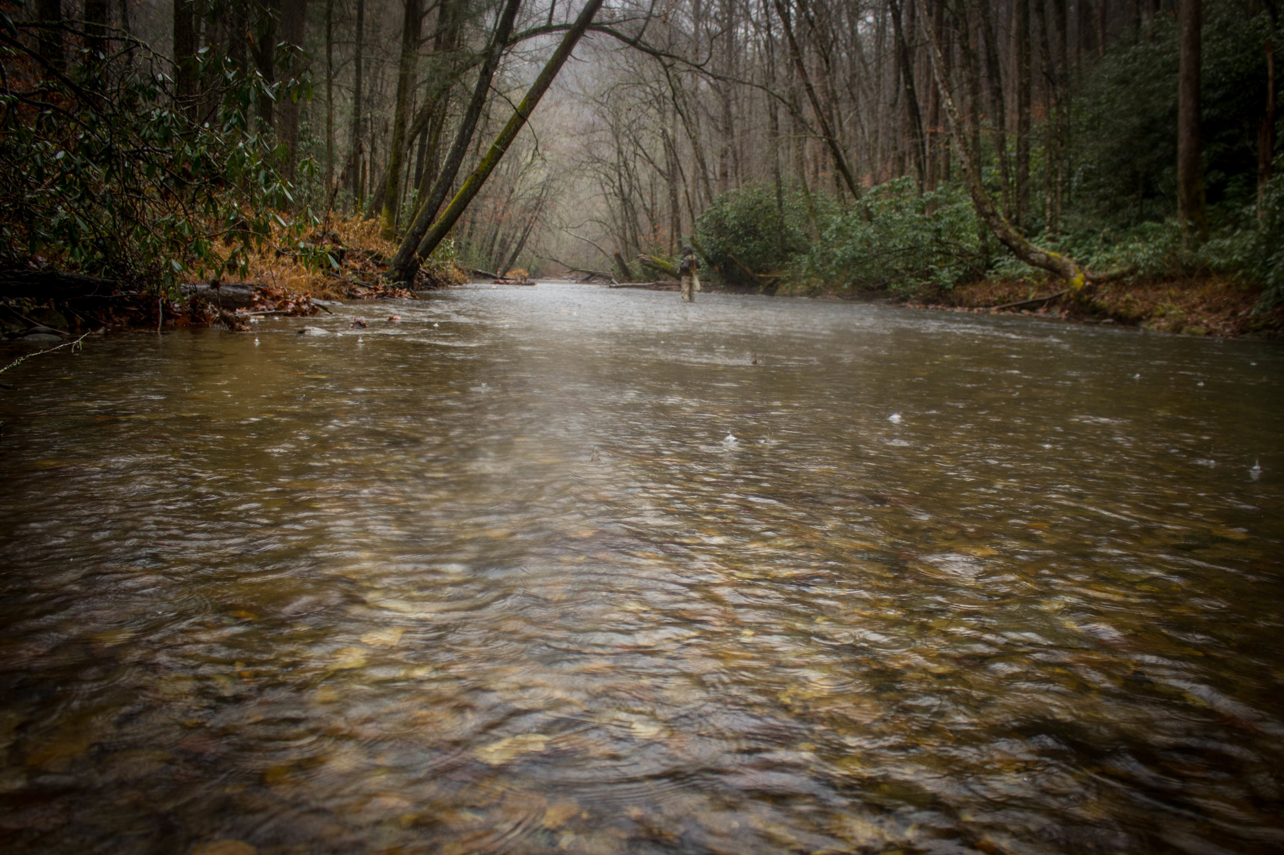 Jillian Schuller Photography - Davidson River - 01
