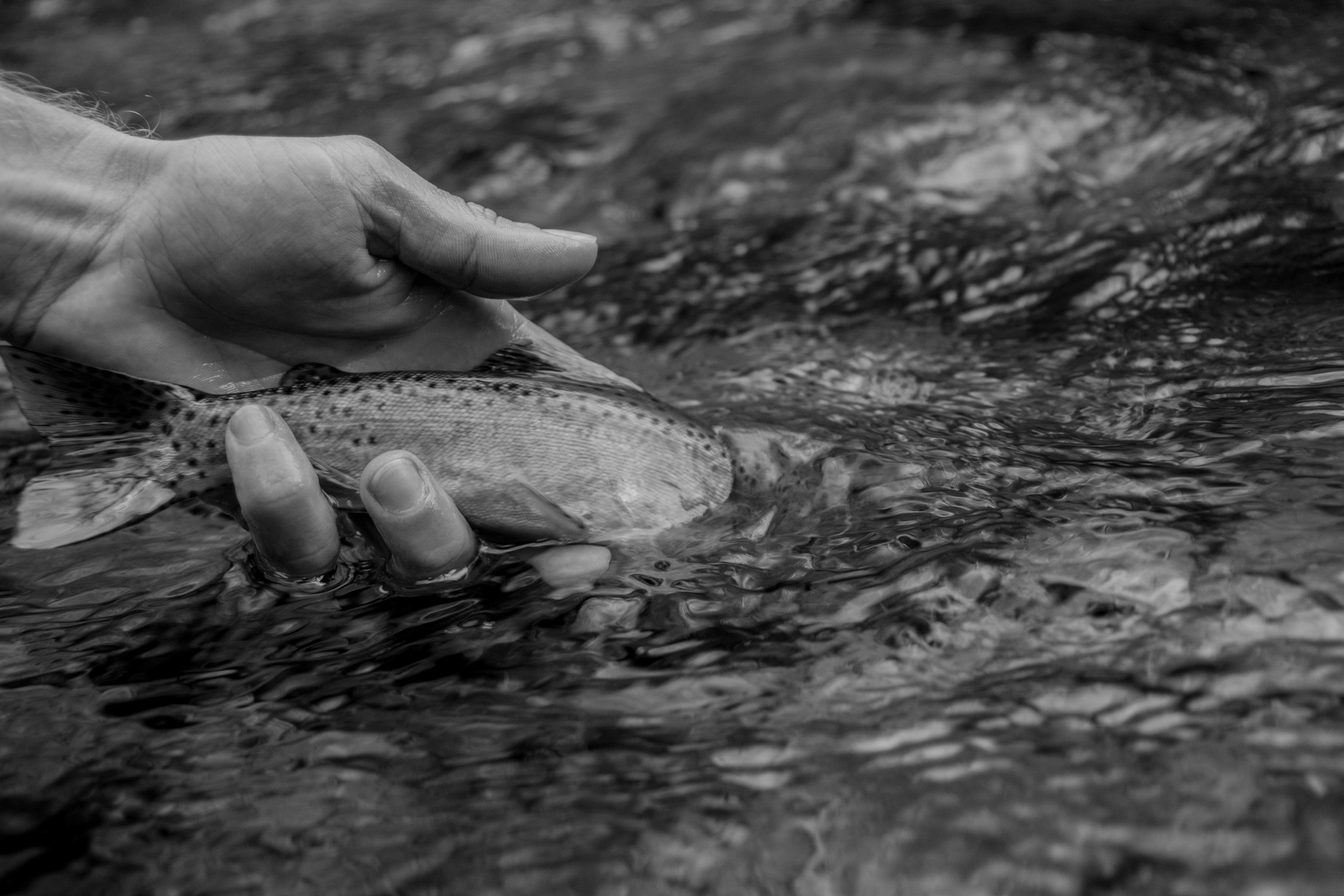 Jillian Schuller Photography - River Therapy