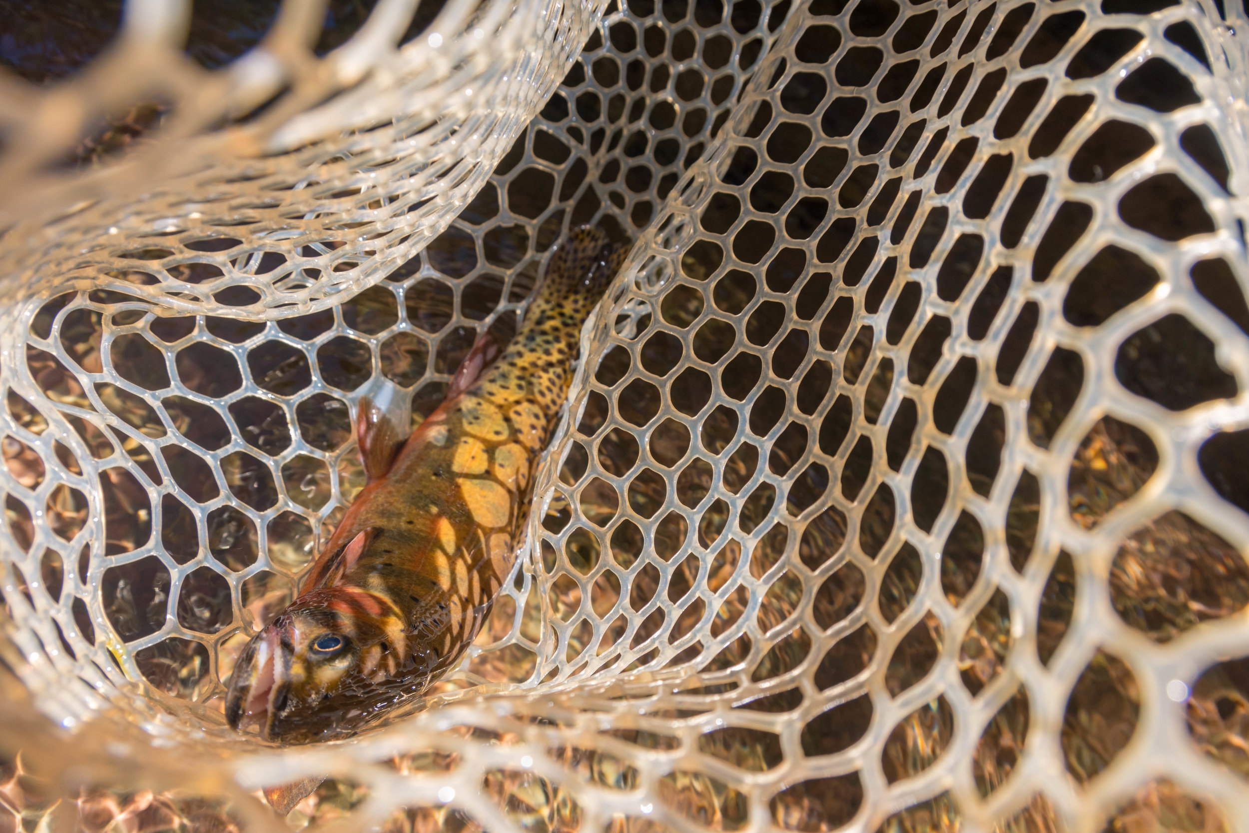 Jillian Schuller Photography - Fly Fishing - Colorado