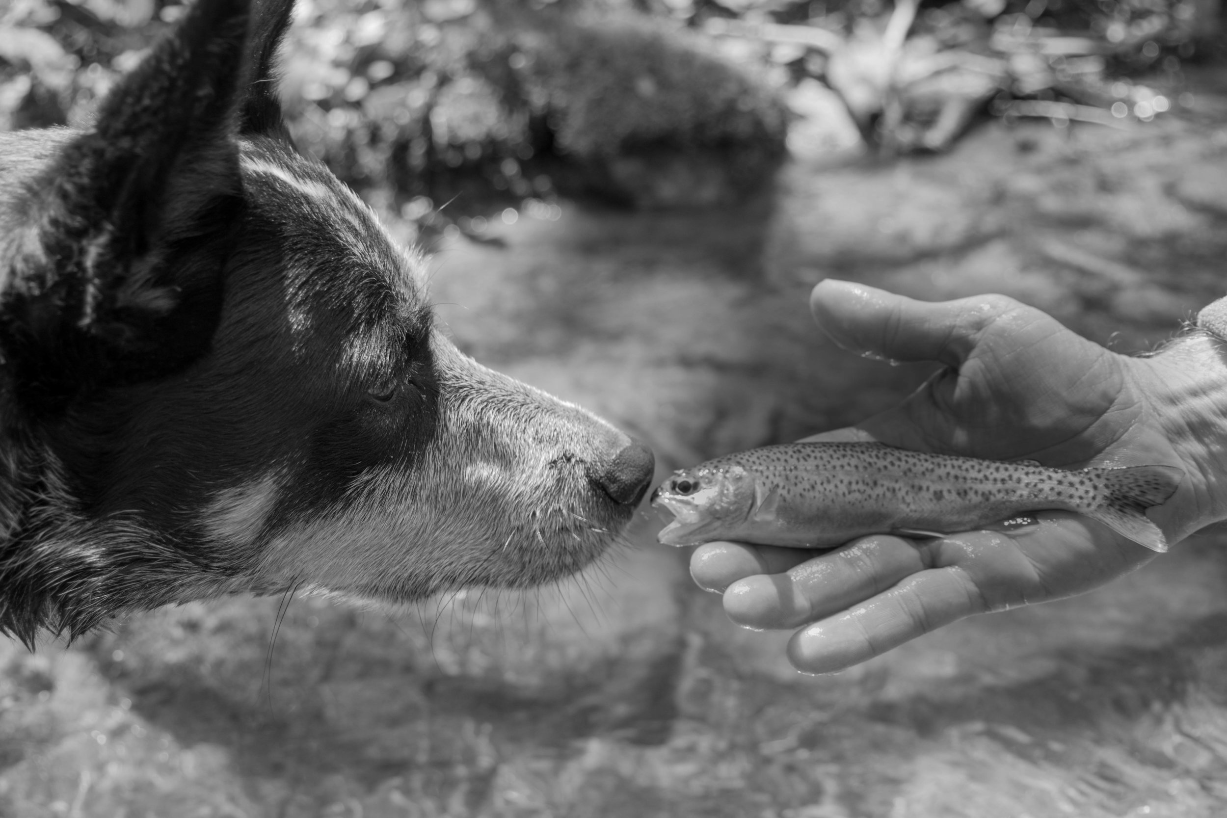 Jillian Schuller Photography - Fly Fishing