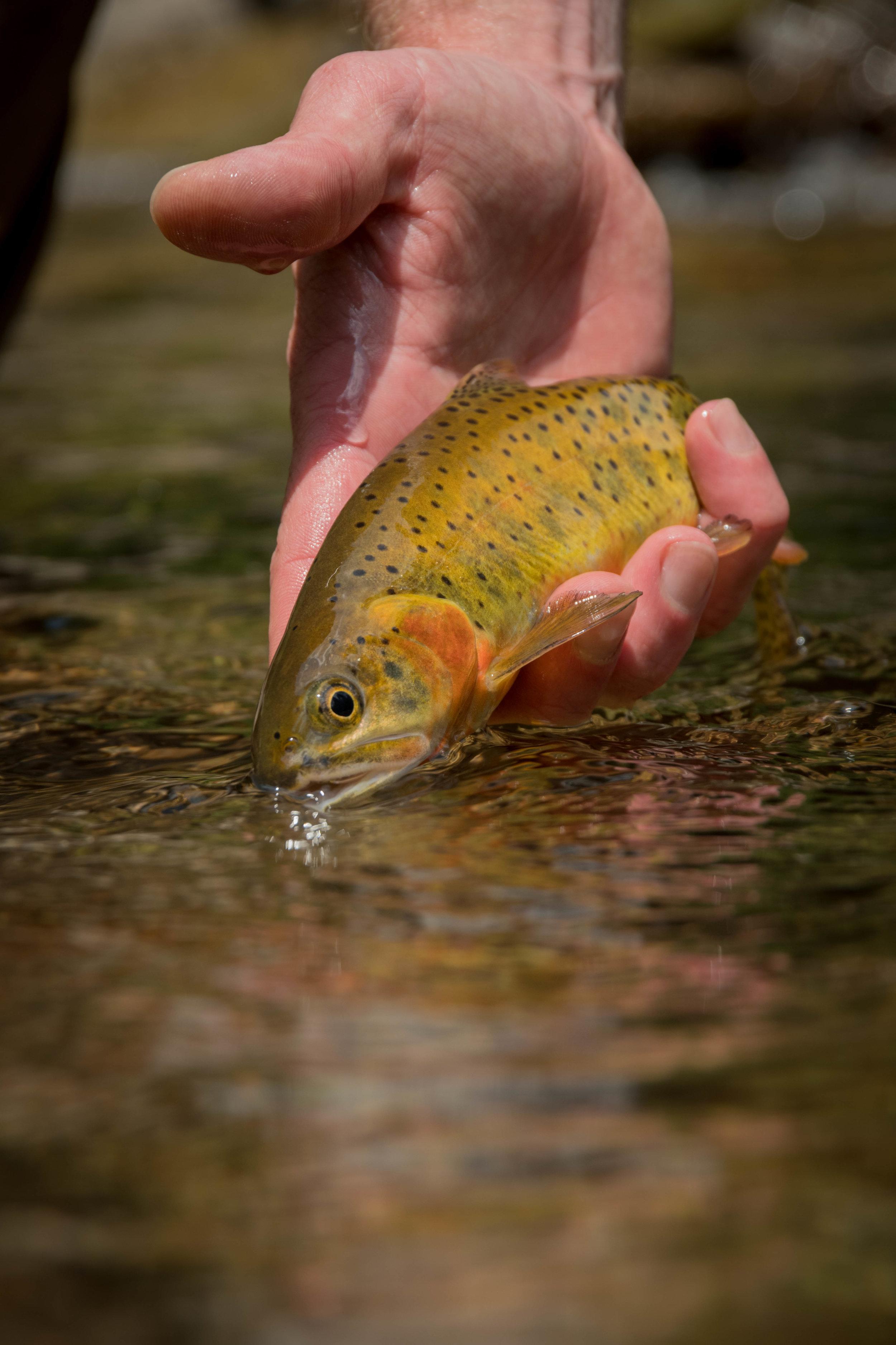 Jillian Schuller Photograpy - Fly Fishing