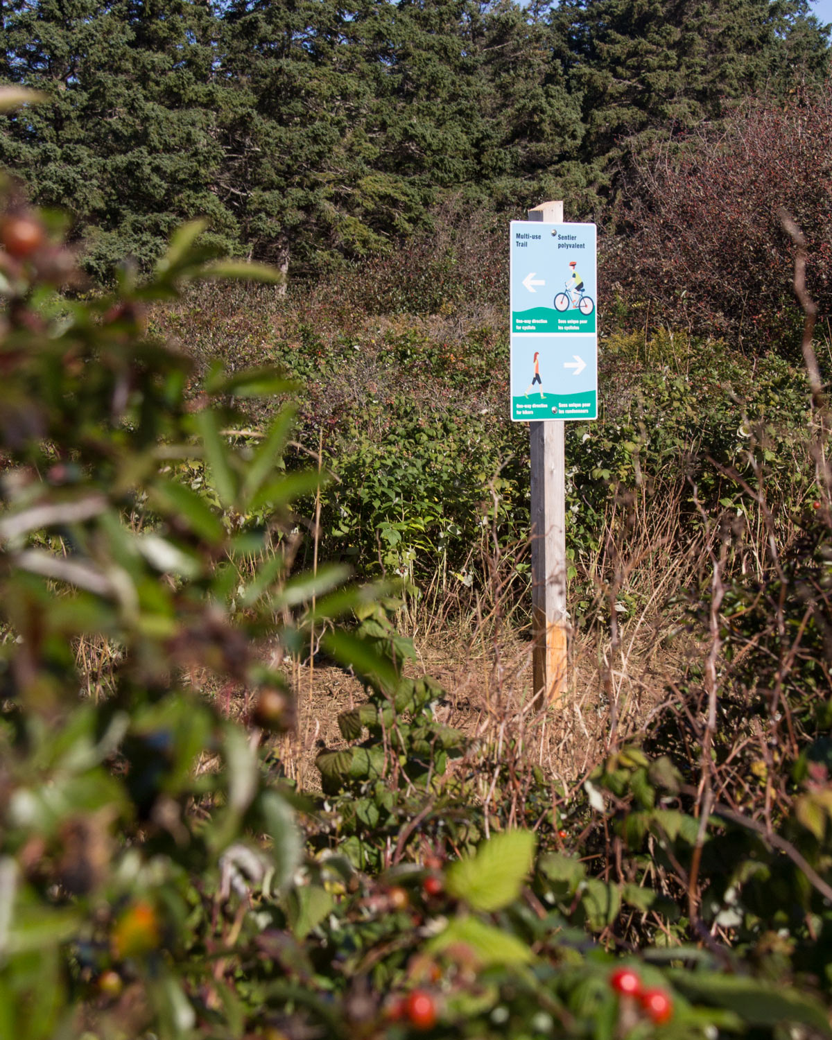 MULTI-USE TRAIL At the entrances to the trail loop, signs assure visitors that they are on the right (or wrong) path.