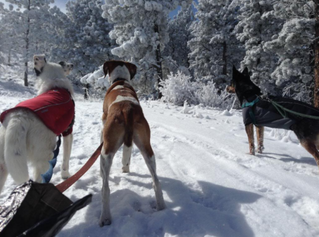Gus, Newton and Roo love to run in the snow.