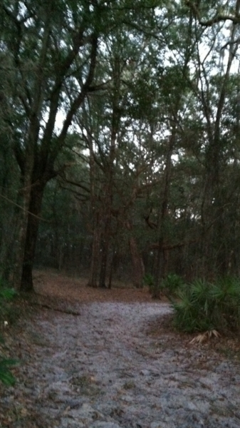 Not far from the trailhead, the white sand trail invites me into the forest.