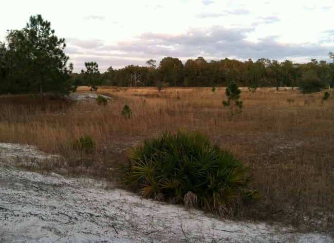 The freshwater depression marsh (the low-lying grassy ground toward the right of the photo), dry at this point in the year.