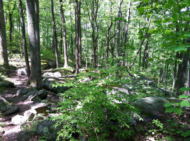 Shady, rocky forest typical of the Old Rag and Robertson Mountain trails.