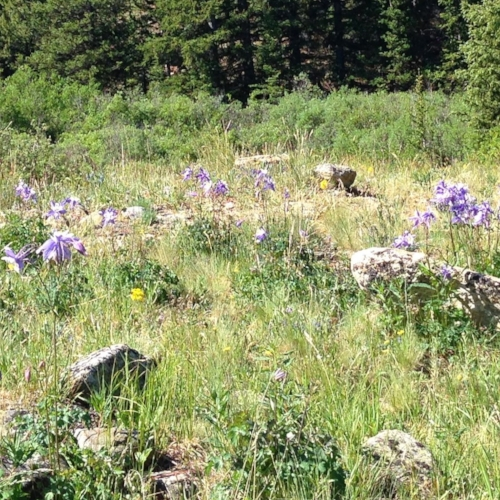 Wildflowers lined the trail the whole way.