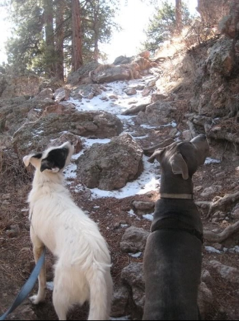 Gus and Jasper love to go uphill.