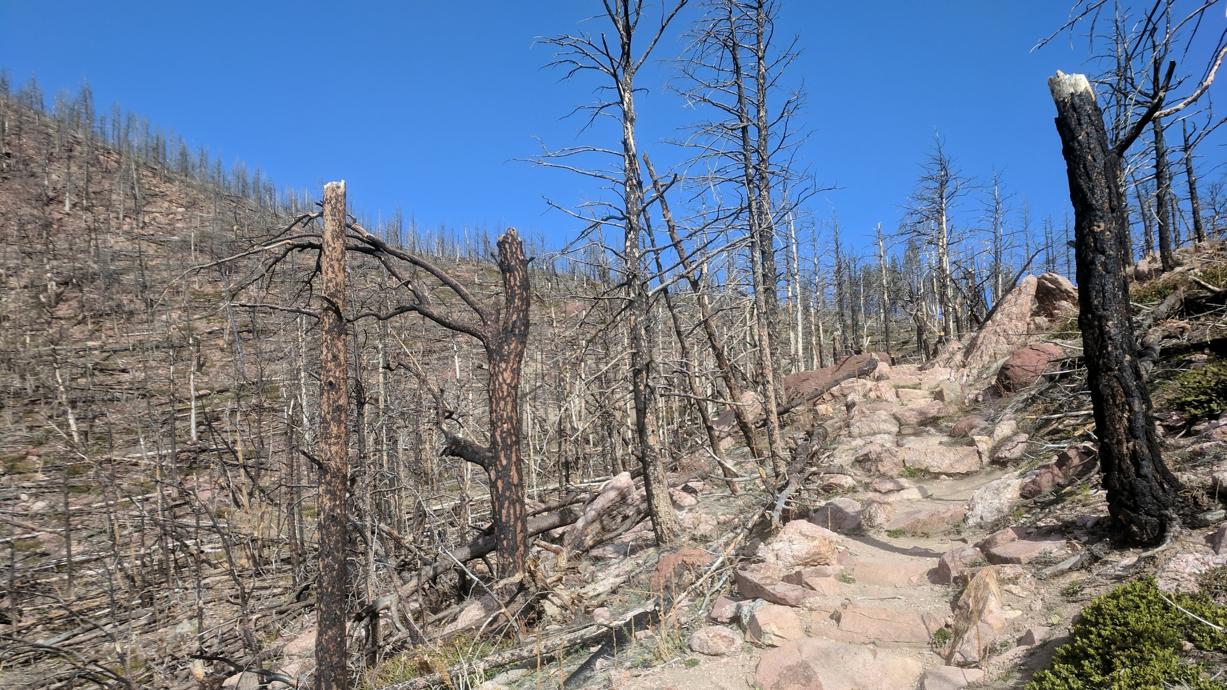 Most of the Shadow Canyon Trail is nicely forested, but the massive Flagstaff Fire in June 2012 left this area toward the top completely burned-out and open. Just beyond where I took this photo (at the trail junction at the saddle), turn left to head up South Boulder Peak.