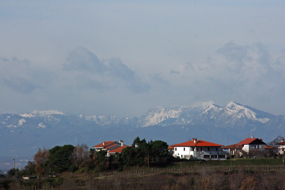 A Collio landscape with the Julian Alps behind
