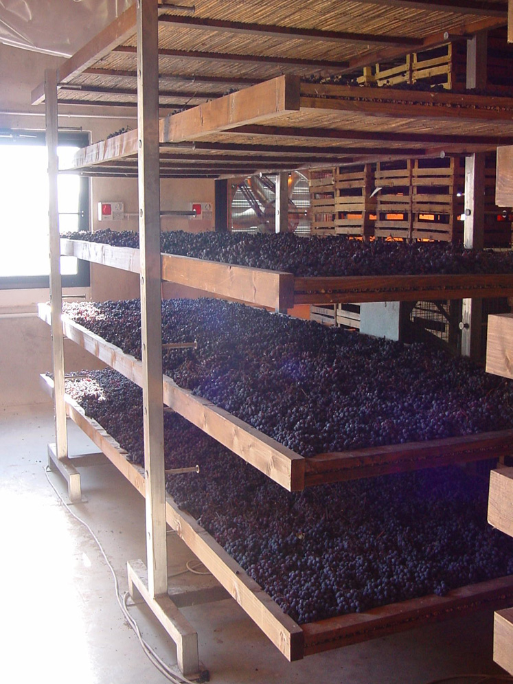 Grapes on their 100-day drying process in the frutaio