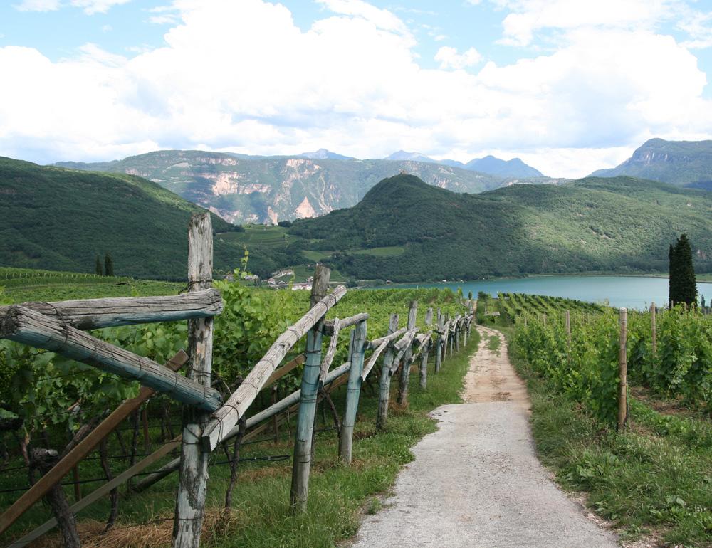 The alpine turf of Alto Adige pinot grigio, here near Lake Caldaro.