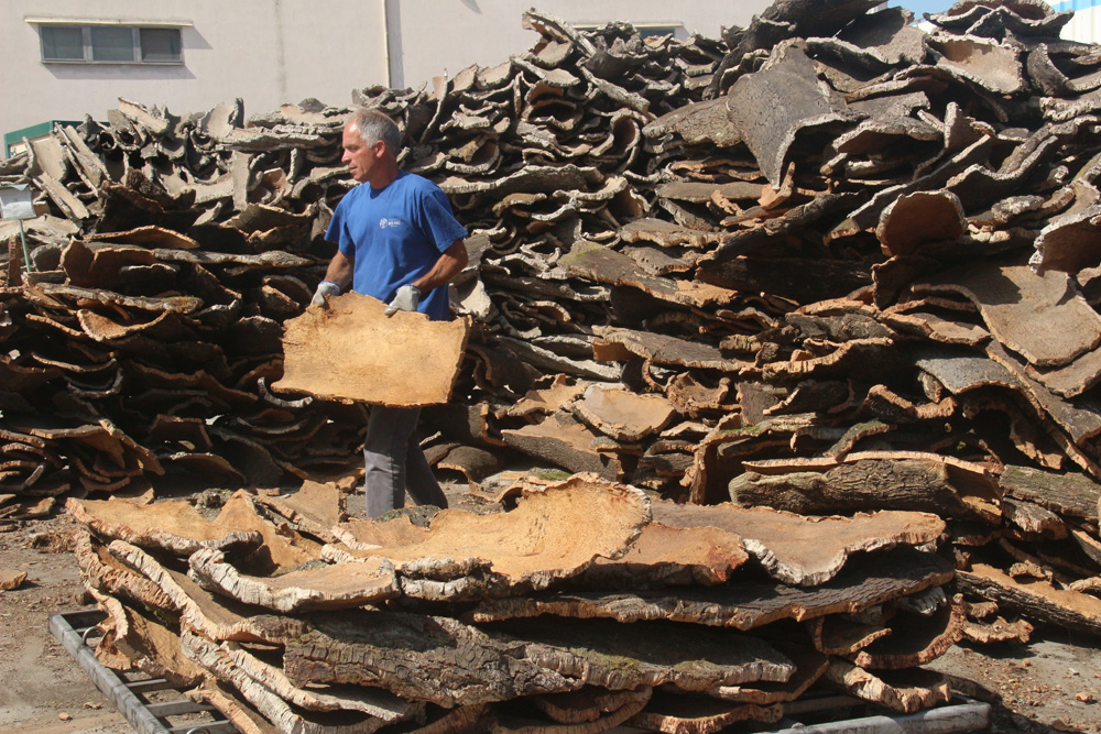 Sorting the bark for thickness, porosity, and appearance.