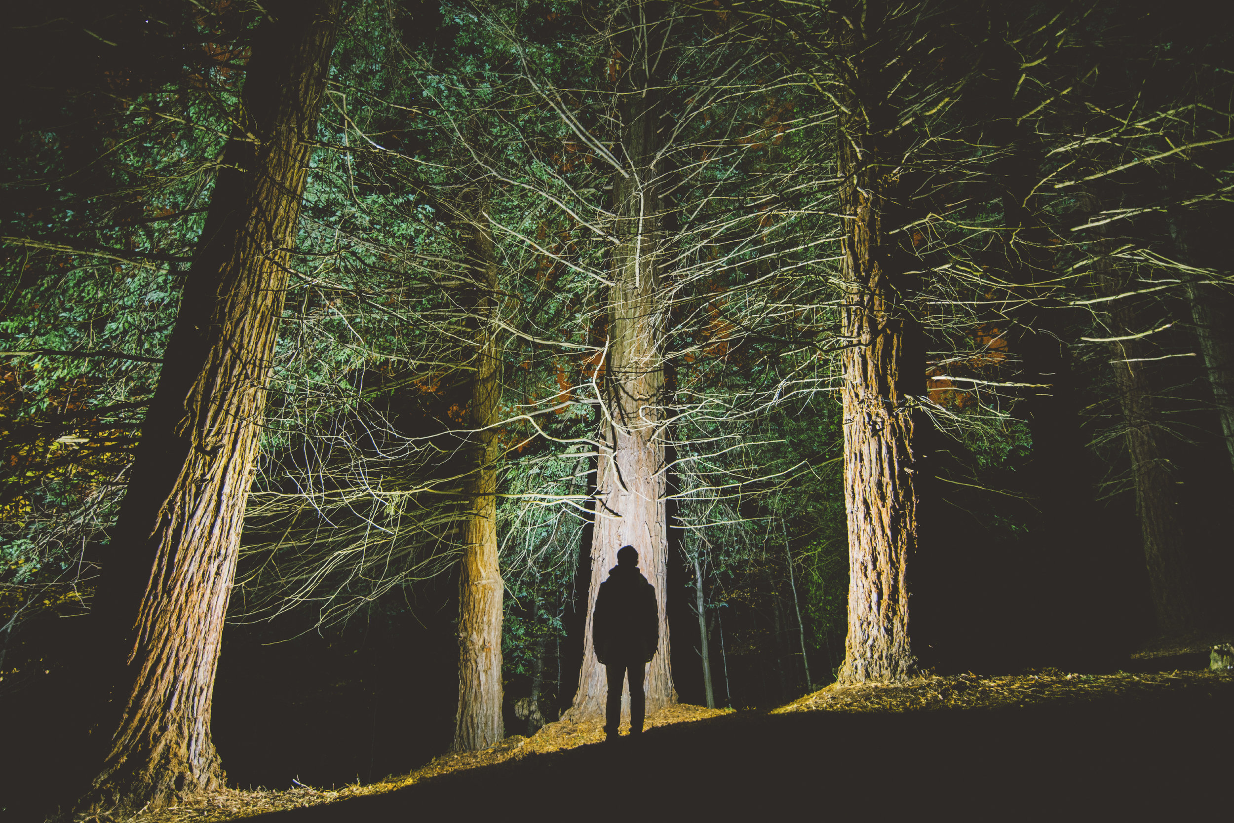 Man's-silhouette-at-forest-000080755217_Large.jpg