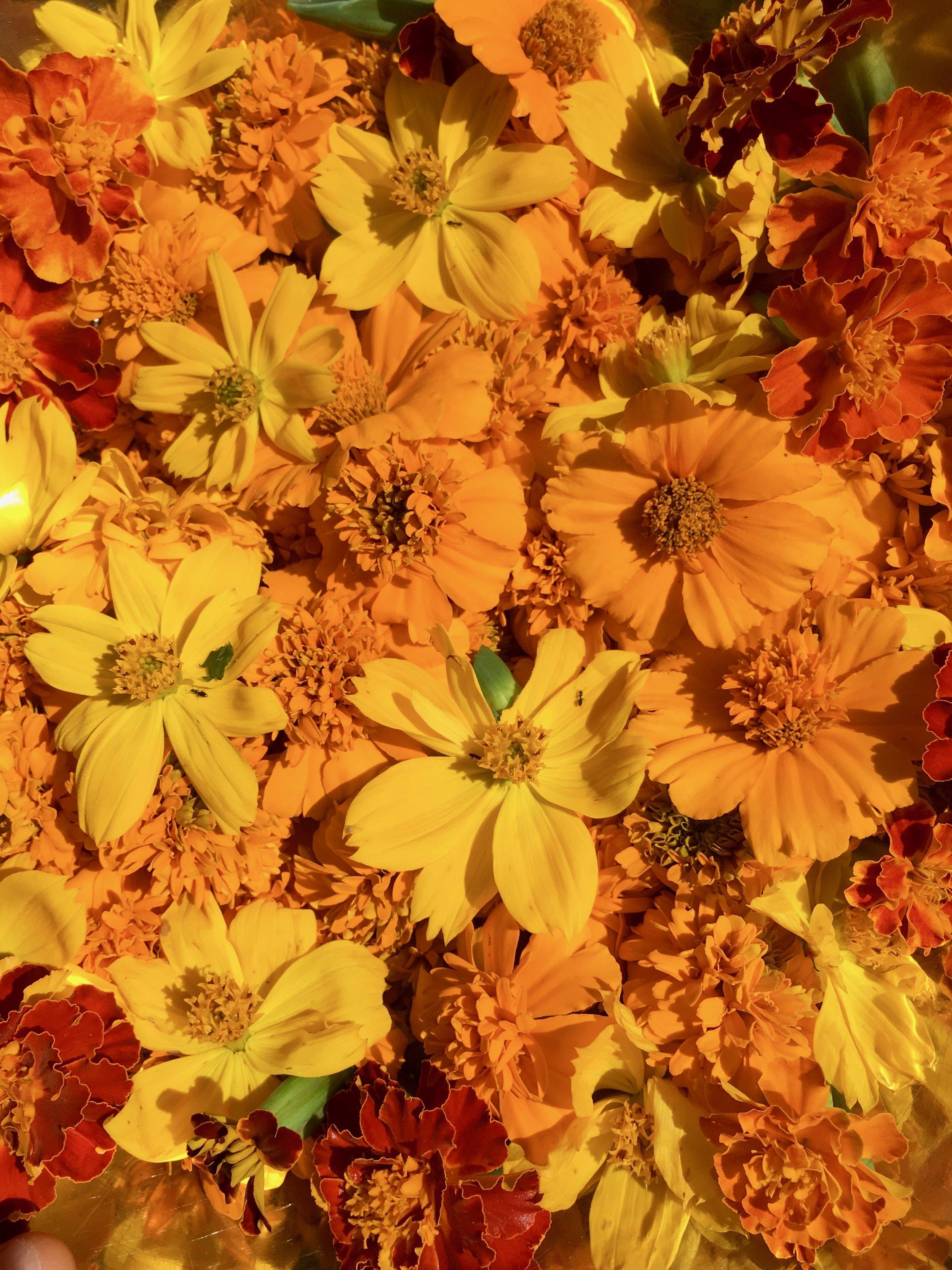 Merigods The Sacred flower of the maya goddess Ix Chel