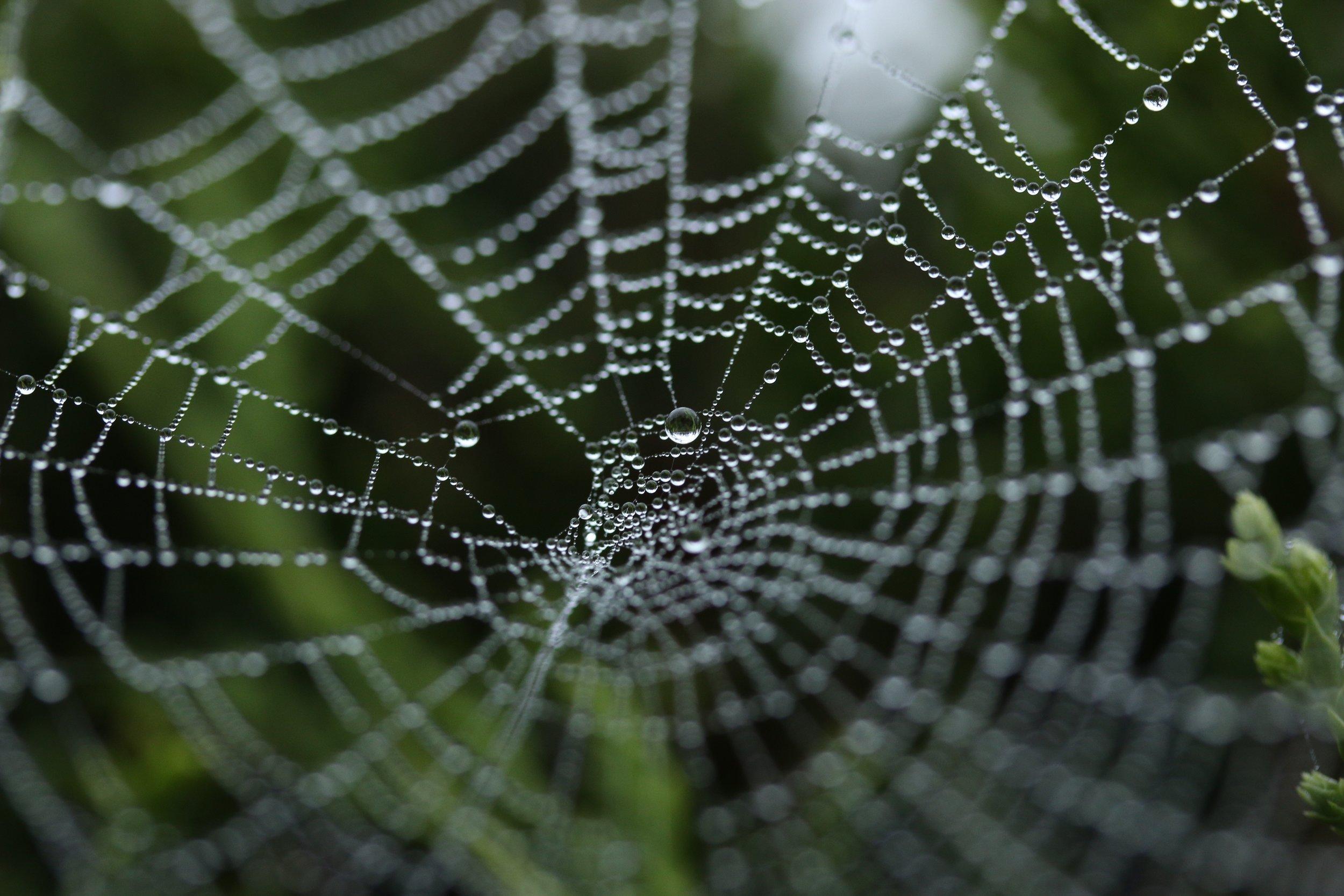 When-your-mother-dies-spiderweb.jpg