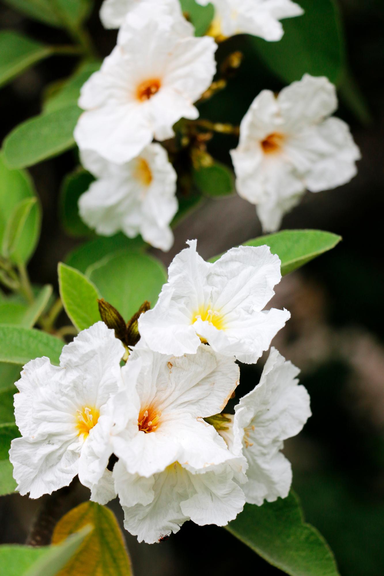 olive_blossom_web.jpg