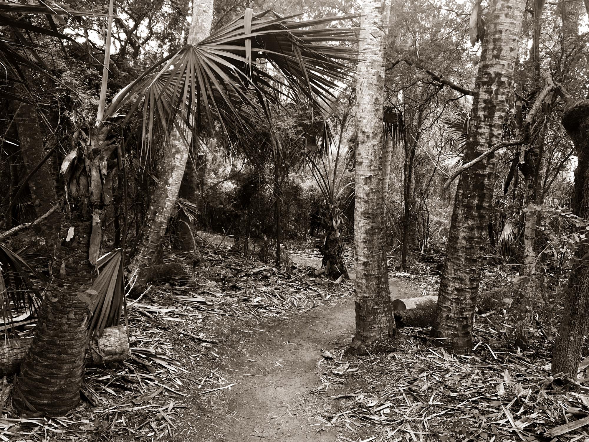 tropical-forrest_bw_web.jpg