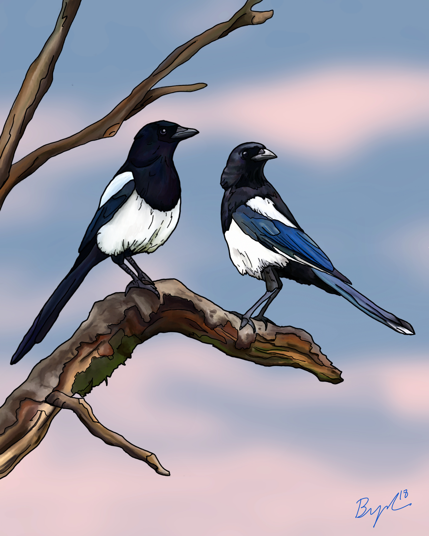 Magpies_.jpg