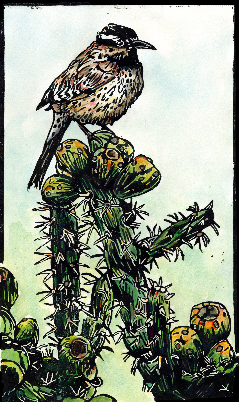 cactus-wren-color_web.jpg