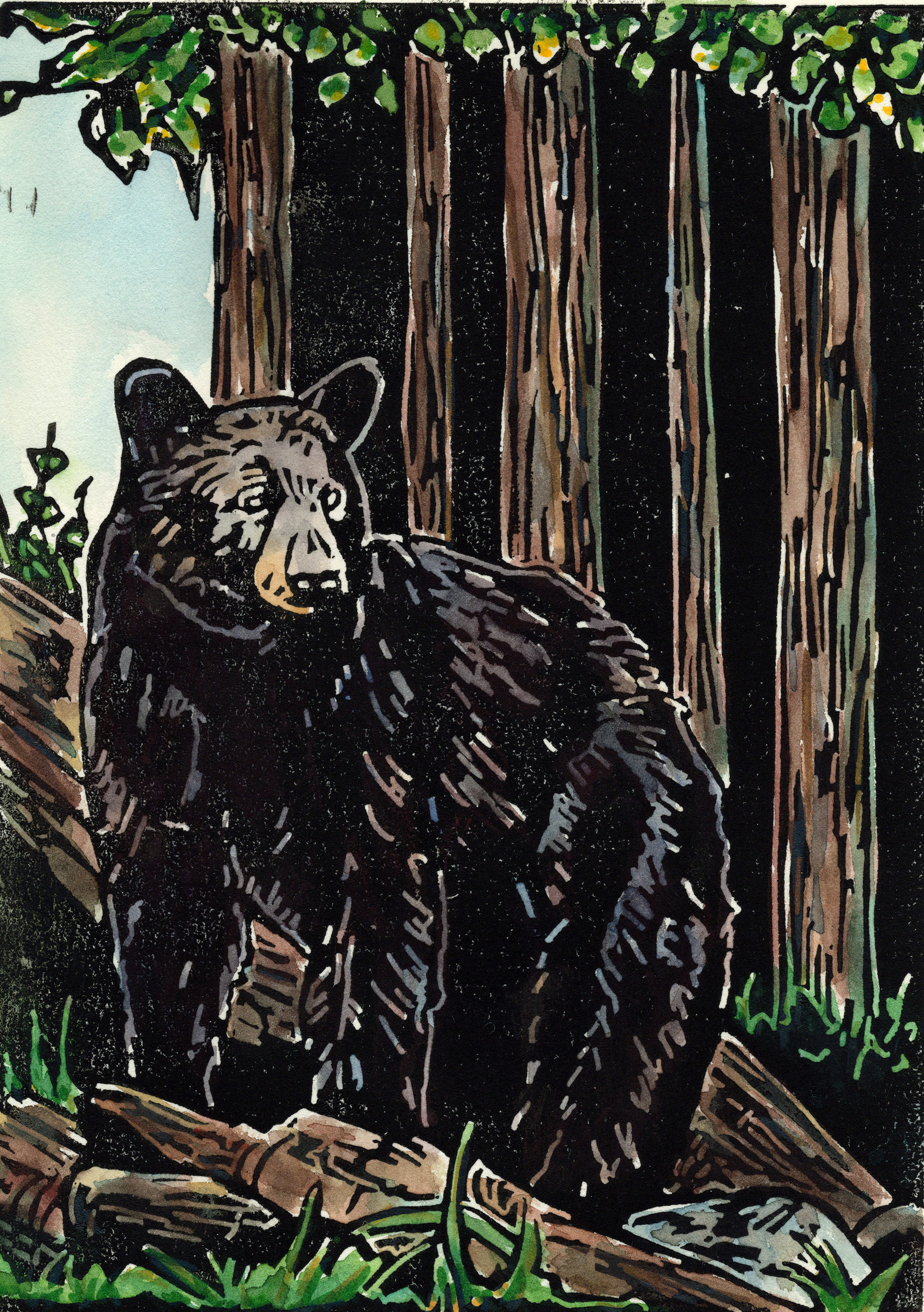 Black-bear-color_web.jpg