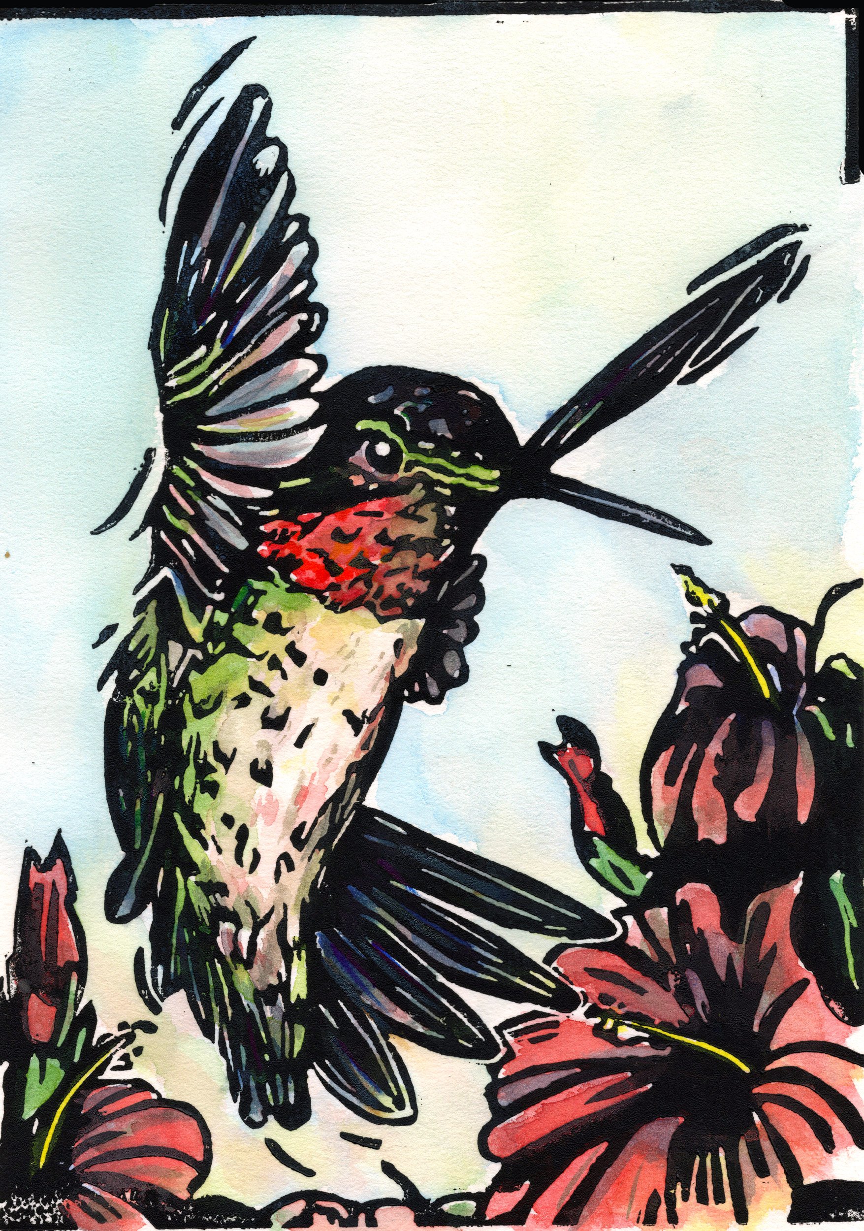 hummingbird-color_web.jpg