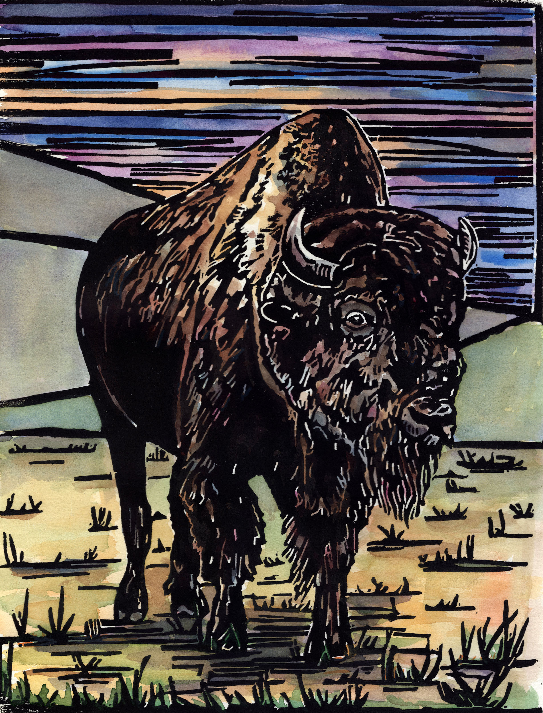 american-buffalo_color_web.jpg