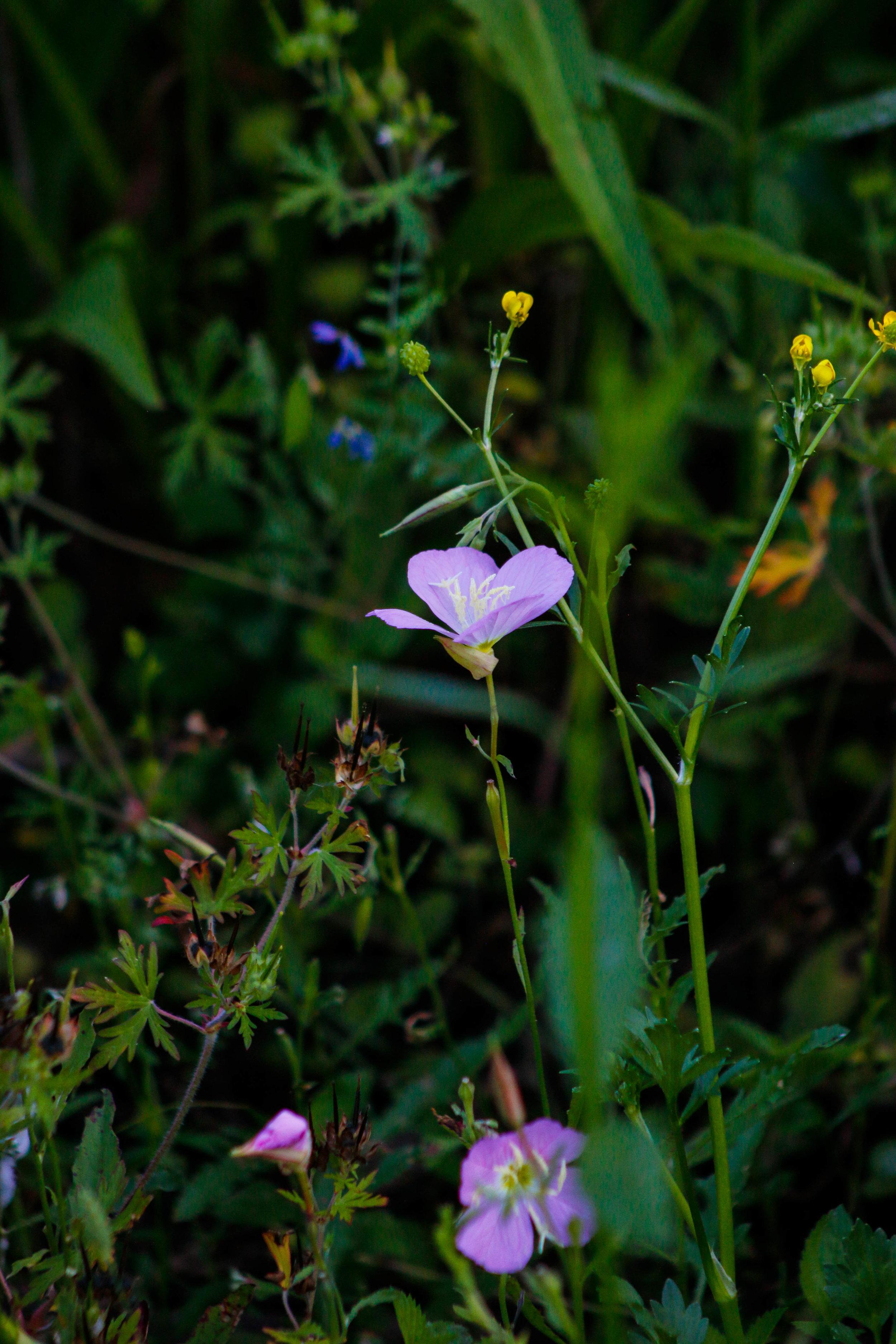 Spring High Island-6.jpg