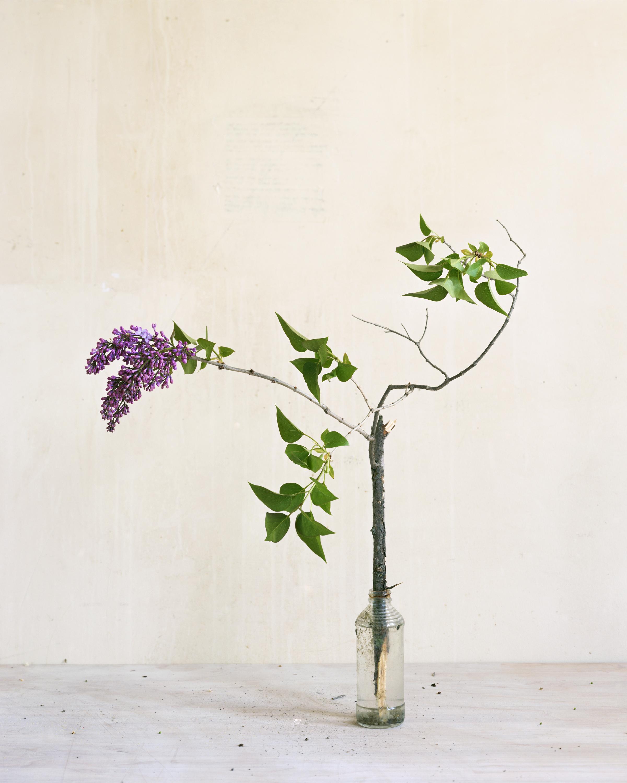 Untitled (purple lilac), 2017