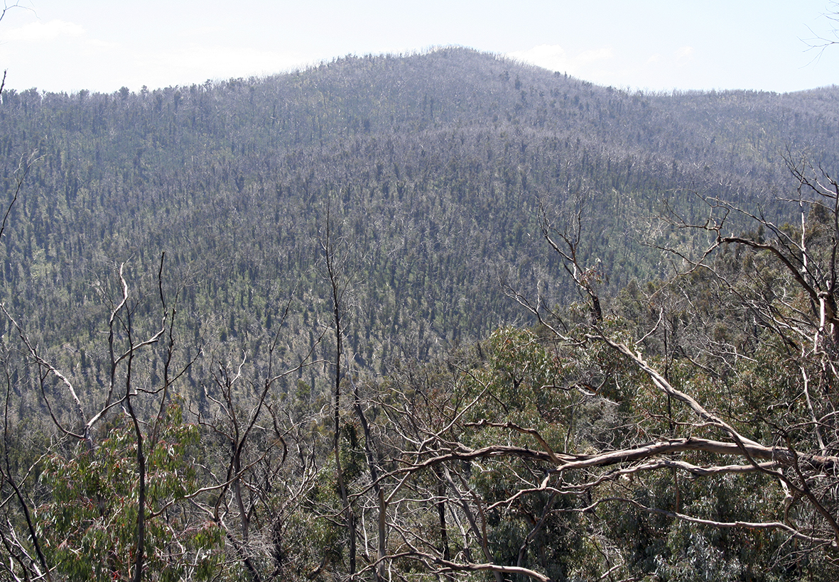 1 From Cowombat Flat Track - Victorian High Country.jpg