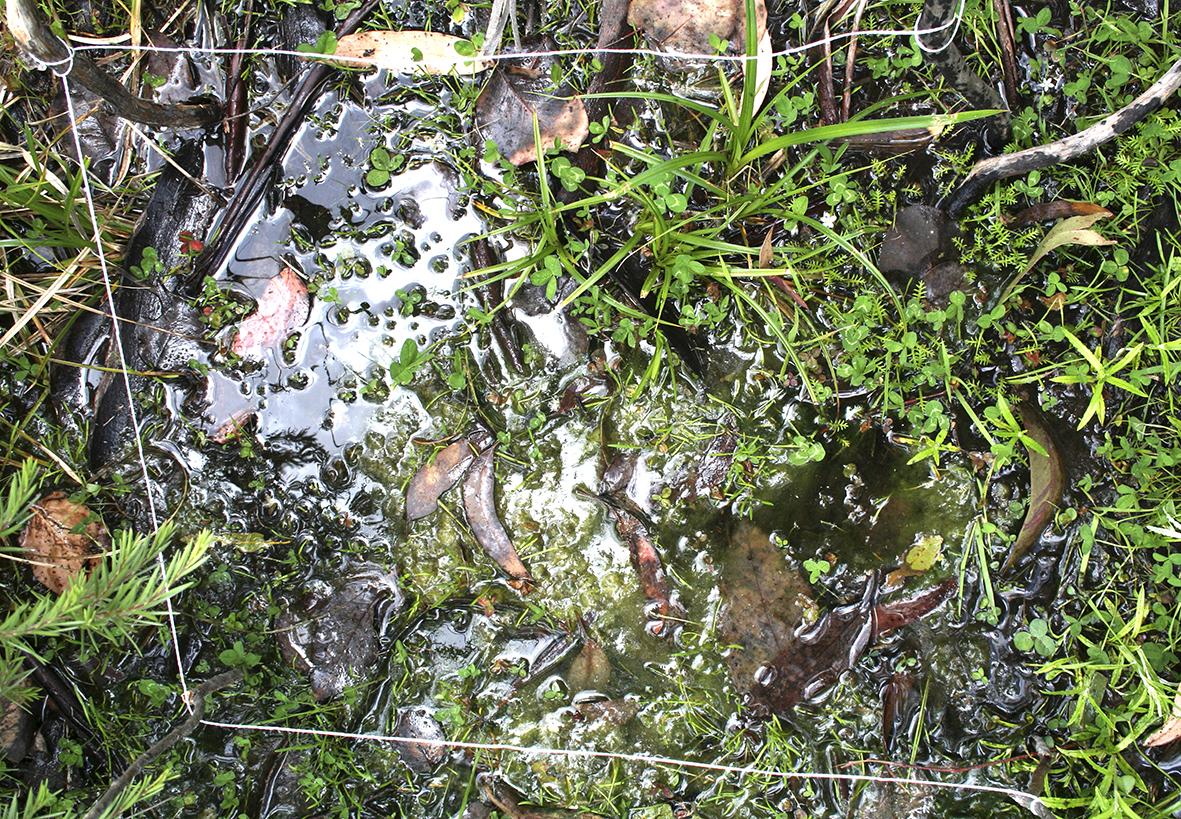 2 Murray Headwaters - Grid B 2008.jpg