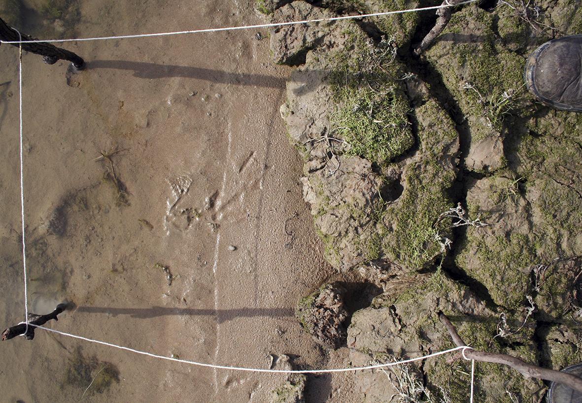 24 Murrumbidgee Murray Junction - Grid A 2007.jpg