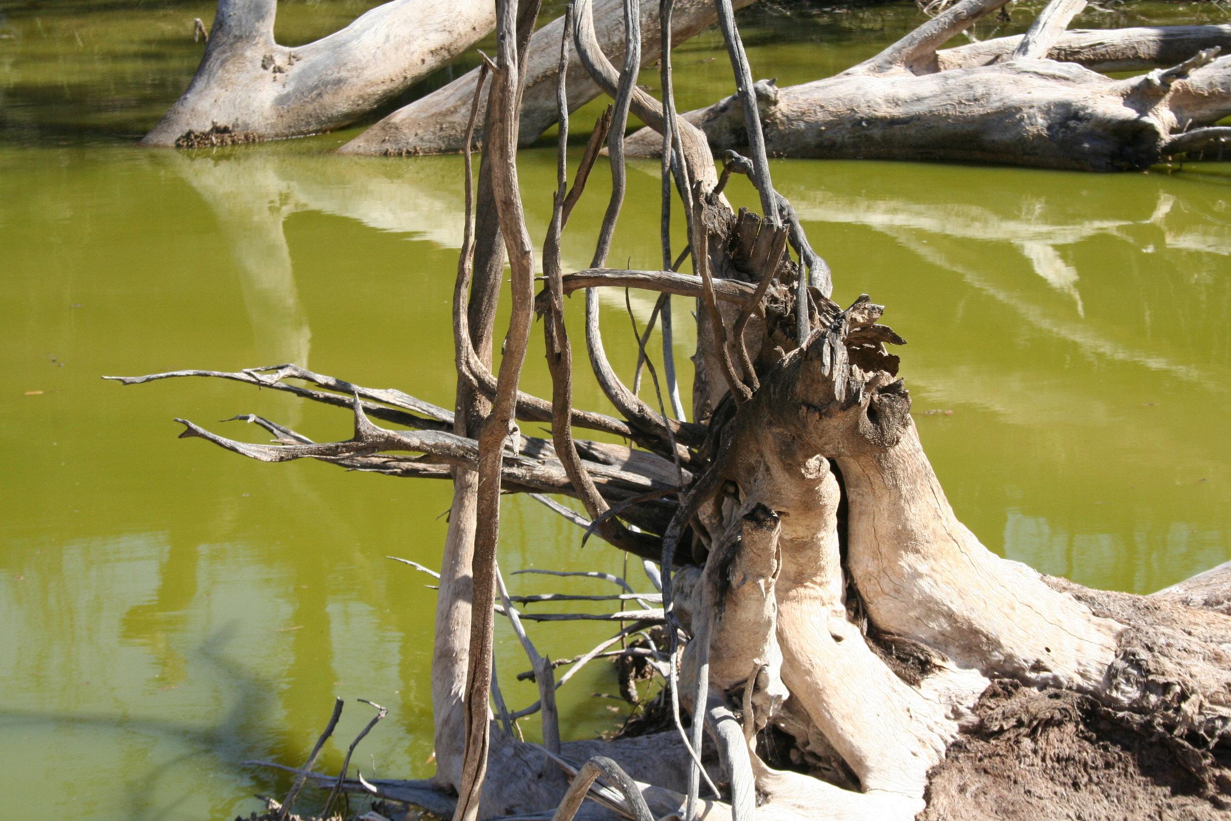 34c Near Mildura - Blue Green Algae 2008.JPG