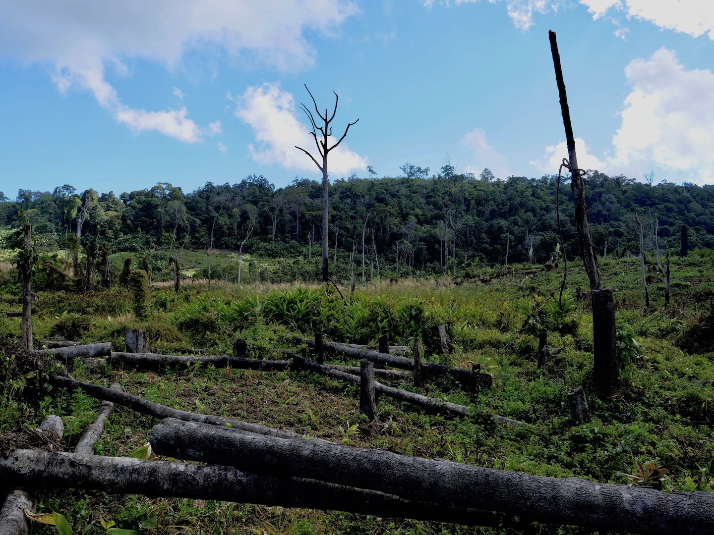 Clearing Trees to Prepare the Land