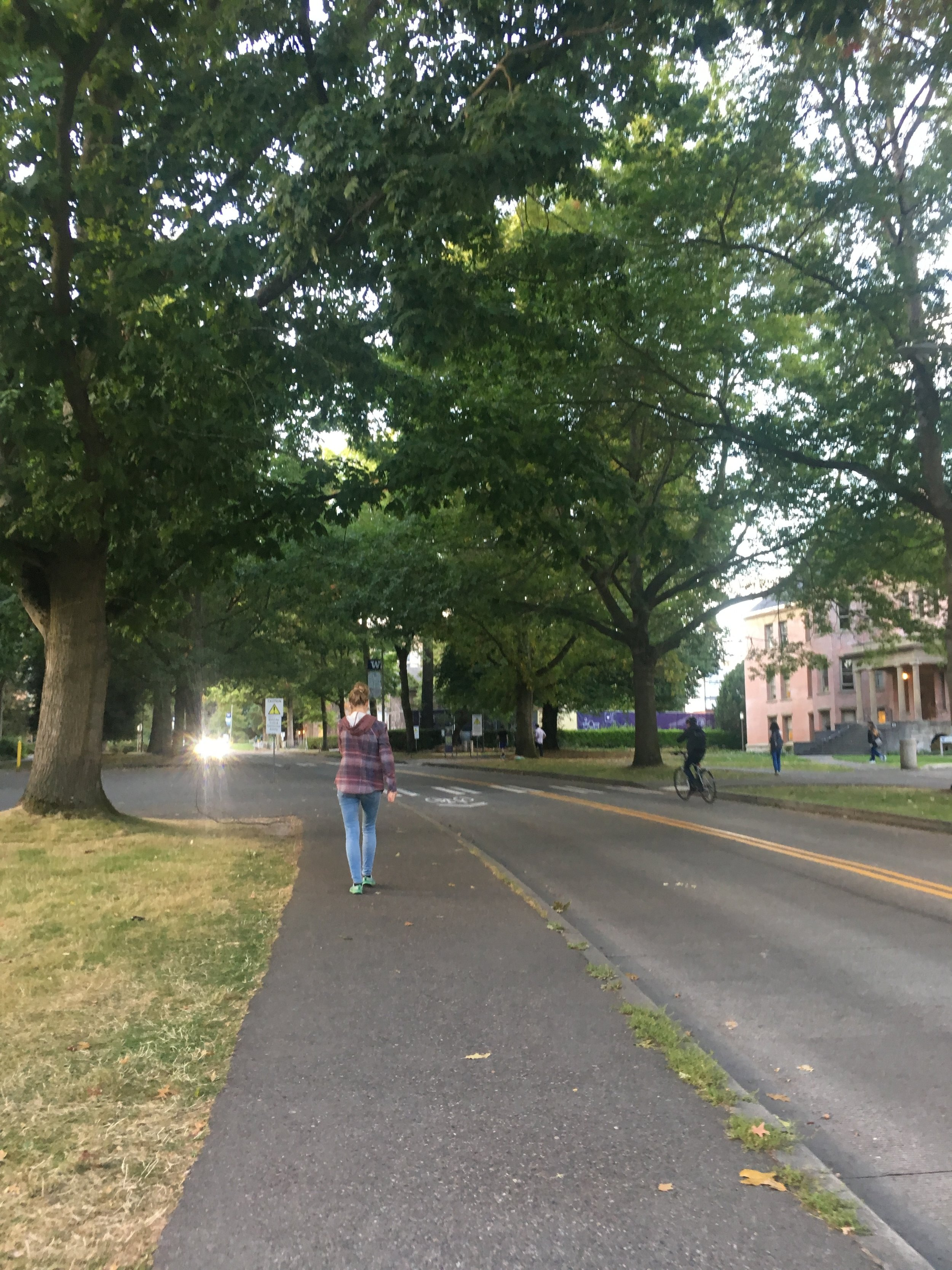 I loved all the trees on University of Washington's campus