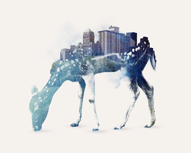 city_deer.jpg
