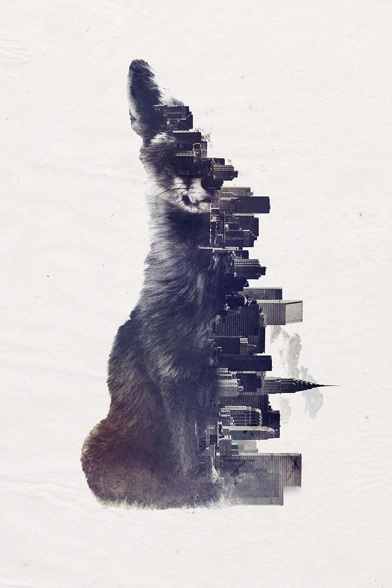 fox_from_the_city.jpg