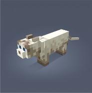 Noxcrew | Minecraft Cat Competition!